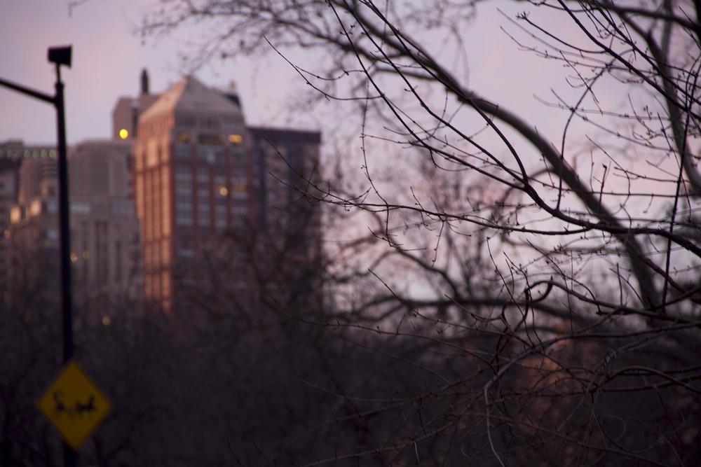 44.central park at dusk